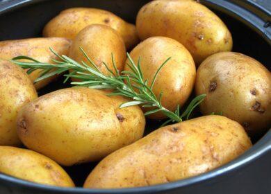 Kartoffelpflanzen für Balkon und Terrasse